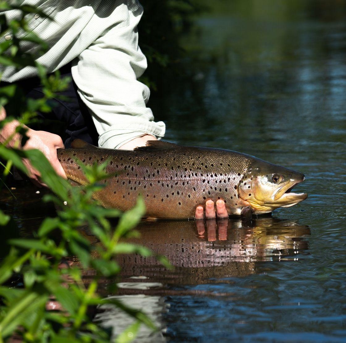 Early Brown Trout Fishing Season