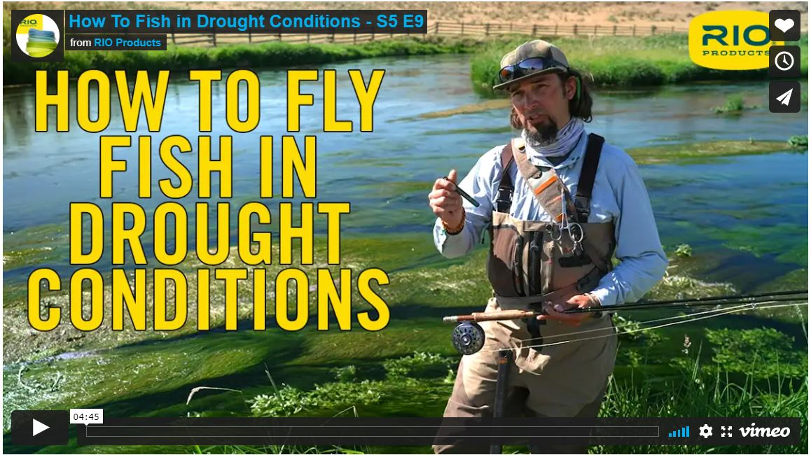How to Fly Fish for Trout in Drought Conditions